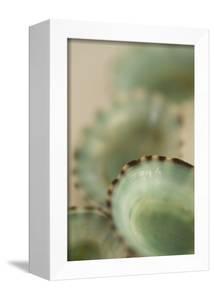 Sea Shells IV by Karyn Millet