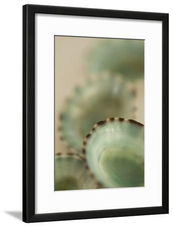Sea Shells IV