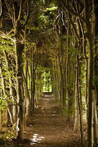 Secret Garden III by Karyn Millet