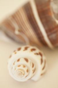 Shell by Shell III by Karyn Millet