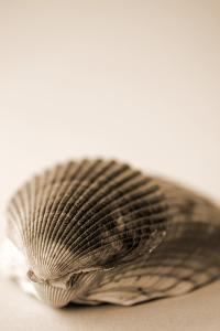 Shell Symmetry I by Karyn Millet