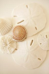 Shells and Dollars by Karyn Millet