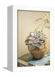 Small Succulent by Karyn Millet
