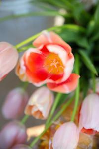 Spring Bloom I by Karyn Millet