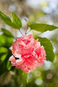 Spring Bloom II by Karyn Millet