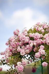 Spring Blossoms I by Karyn Millet
