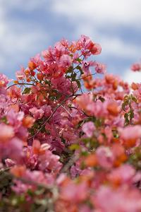 Spring Blossoms II by Karyn Millet
