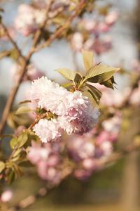 Spring Blossoms IV by Karyn Millet