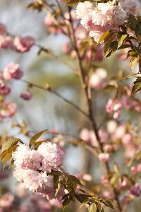 Spring Blossoms V by Karyn Millet