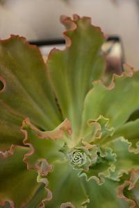 Succulent Garden II by Karyn Millet