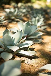 Succulent Garden III by Karyn Millet