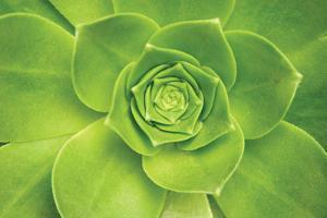 Succulent II by Karyn Millet