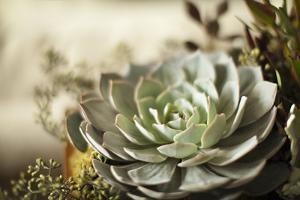 Succulent III by Karyn Millet