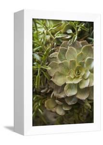 Succulent IV by Karyn Millet