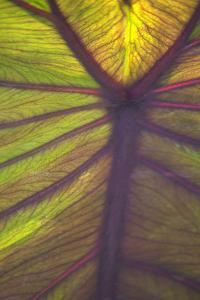 Sun in the Leaves I by Karyn Millet