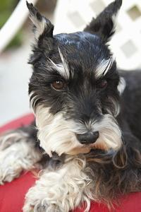 Terrier by Karyn Millet