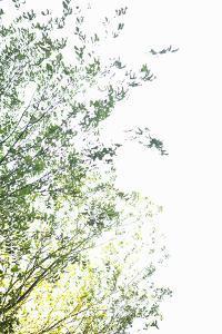 Trees I by Karyn Millet