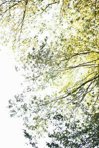Trees II by Karyn Millet