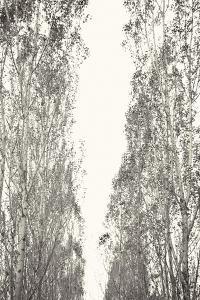Trees III by Karyn Millet