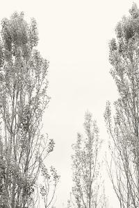 Trees IV by Karyn Millet