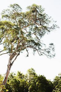 Trees V by Karyn Millet