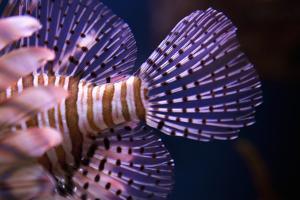 Tropical Fish by Karyn Millet