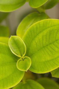 Tropical Leaves I by Karyn Millet