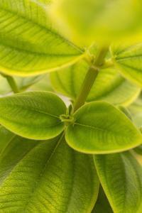 Tropical Leaves II by Karyn Millet