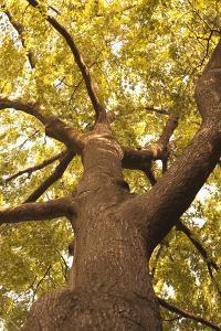 Up in the Trees II by Karyn Millet