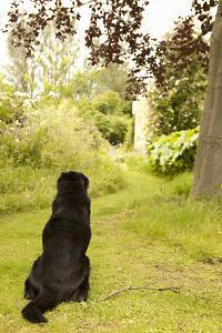 Watch Dog by Karyn Millet