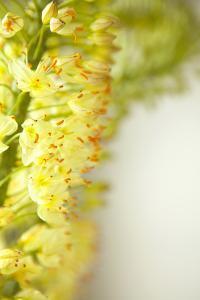 White Flowers II by Karyn Millet