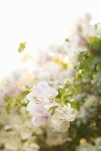 White Flowers IV by Karyn Millet