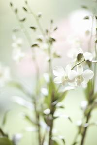 White Orchid I by Karyn Millet