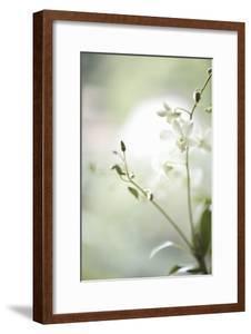 White Orchid II by Karyn Millet