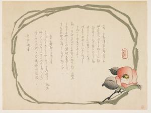 Camellia, January 1860 by Kasai