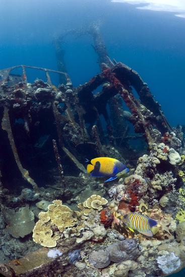 Kasi Maru Shipwreck And Fish-Georgette Douwma-Photographic Print
