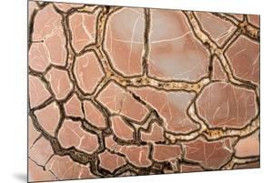 Gemstone Wallpaper by Kasia Bialasiewicz