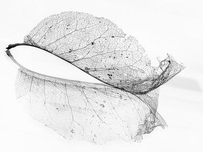 The Old Leaf