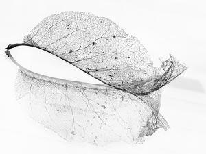 The Old Leaf by Katarina Holmström