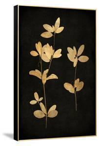 Golden Nature IV by Kate Bennett