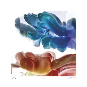 Botanical 12 by Kate Blacklock