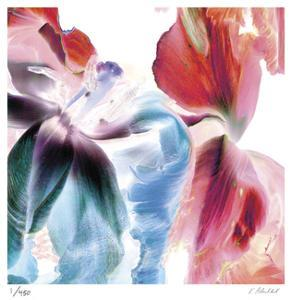 Botanical 4 by Kate Blacklock