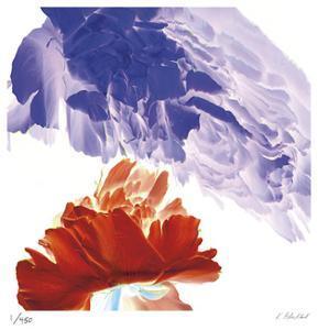 Botanical 9 by Kate Blacklock