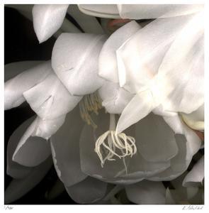 Florals 12 by Kate Blacklock