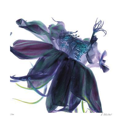 Night Bloom 1 by Kate Blacklock