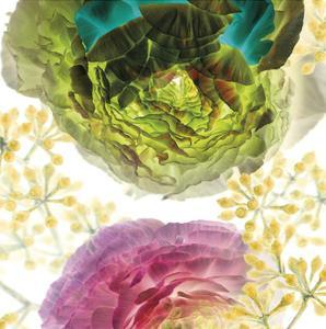 Ranunculus by Kate Blacklock