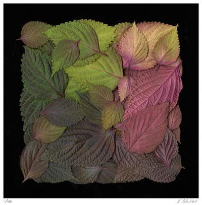 Square Leaves by Kate Blacklock