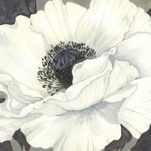 Pure Poppy II by Kate Mawdsley