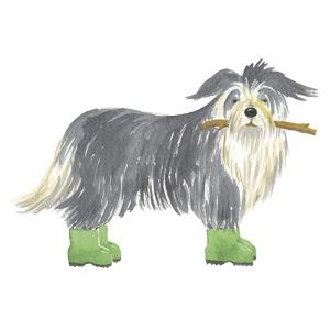 Shaggy Dog I by Kate Mawdsley