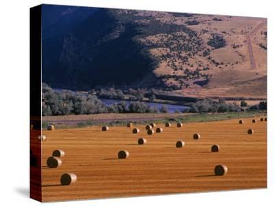 Bales of Hay in a Farmers Field